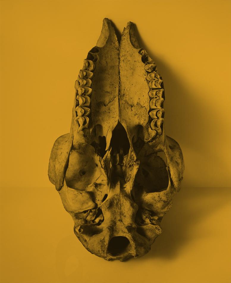 bones-2neo