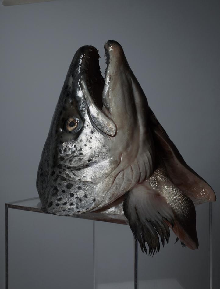 fish1neo