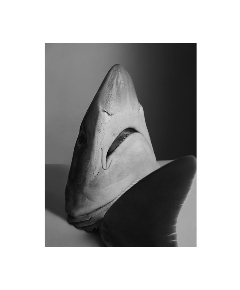 sharknb