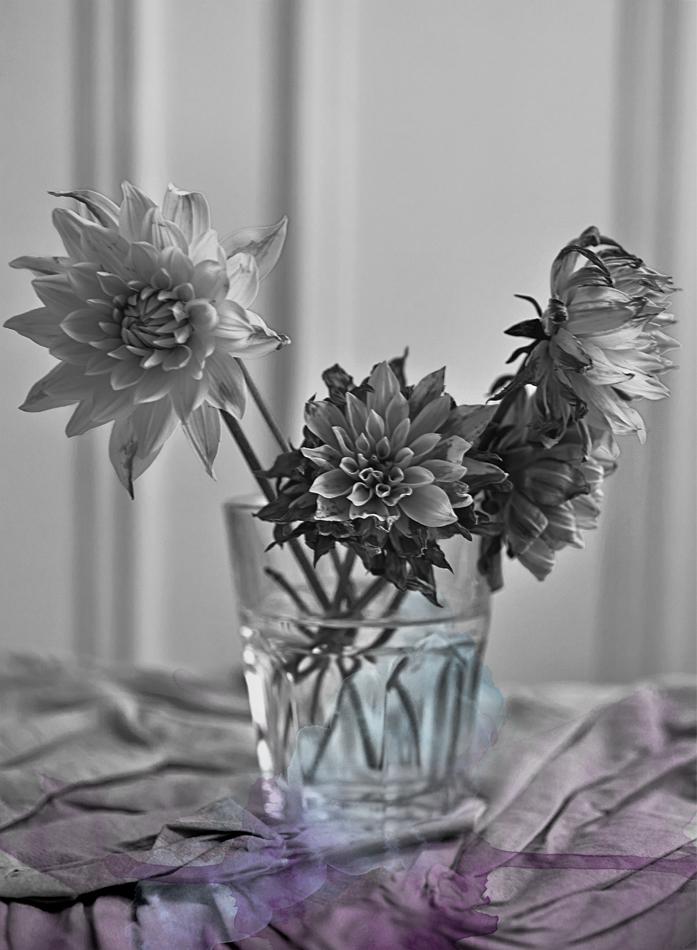 flowersnb1versionbook