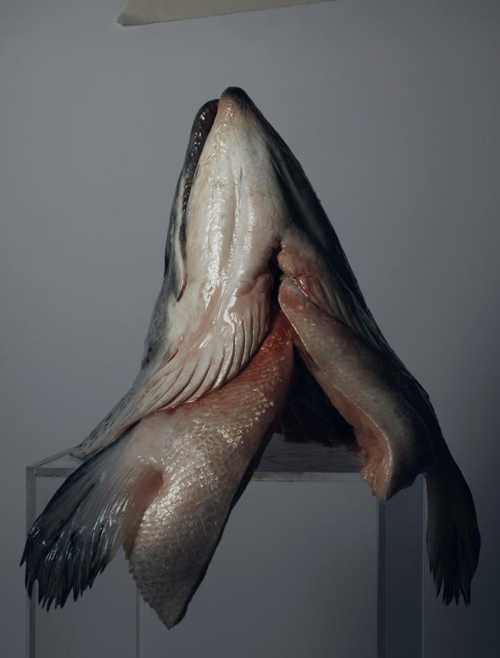 fish2neo