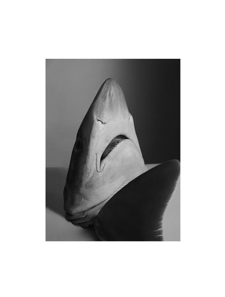 fish2neobw