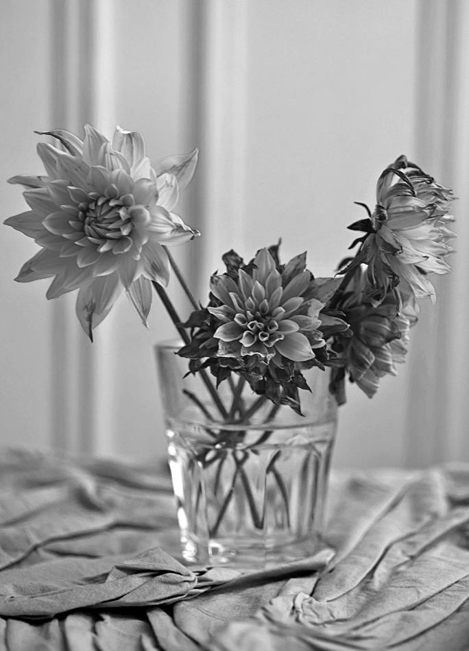 flowersnb1