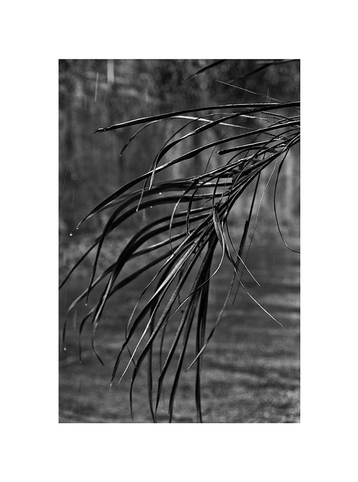feuillespluie